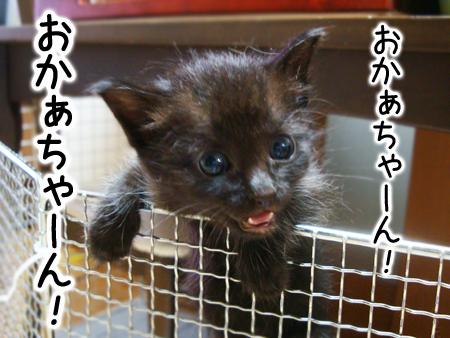 仔猫ファイブ2012.9.4③