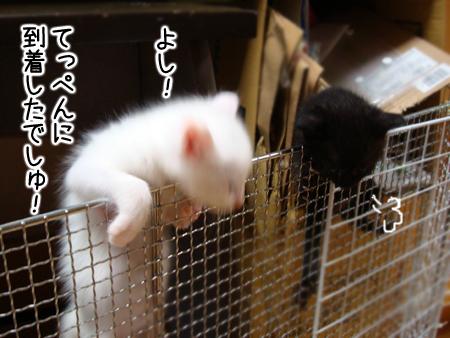 仔猫ファイブ2012.9.4②