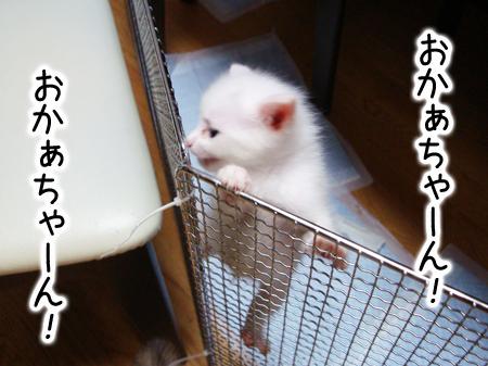仔猫ファイブ2012.9.4④
