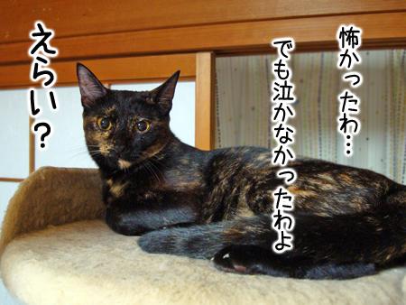 サビかぁさん2012.9.5