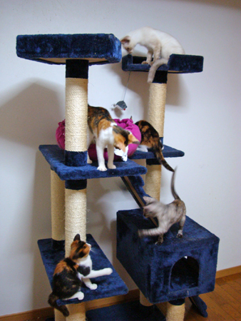 仔猫タワー2012.9