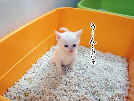 仔猫トイレ①