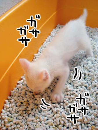 仔猫トイレ③