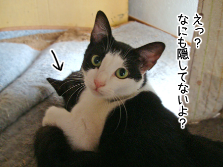ノラコと仔猫2012.9.16②