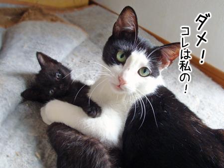 ノラコと仔猫2012.9.16①