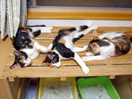 ノラコ姉妹2012.9.16