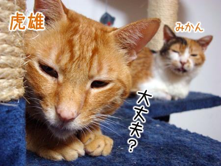 虎雄&みかん2012.9.19