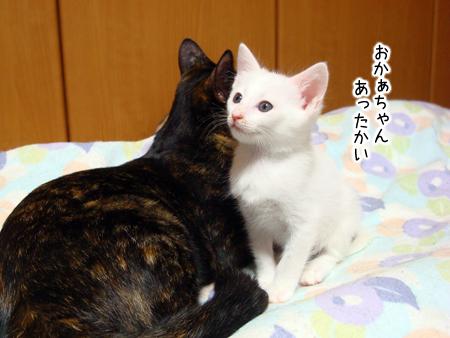 仔猫ファイブ2012.9.22②