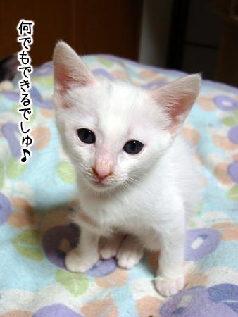 仔猫ファイブ2012.9.22①