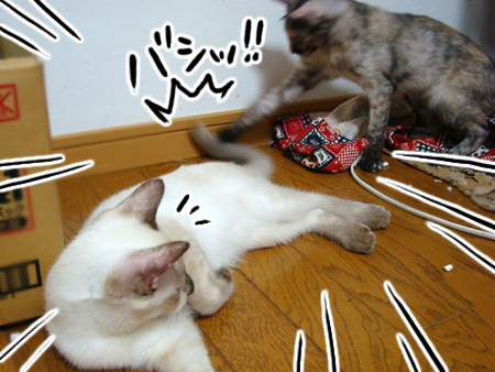 チャムとスンスン2012.9.24①