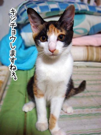 ノラコ2012.9.25②