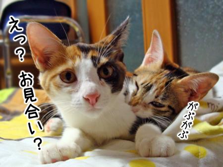 ノラコ姉妹2012.9.25①