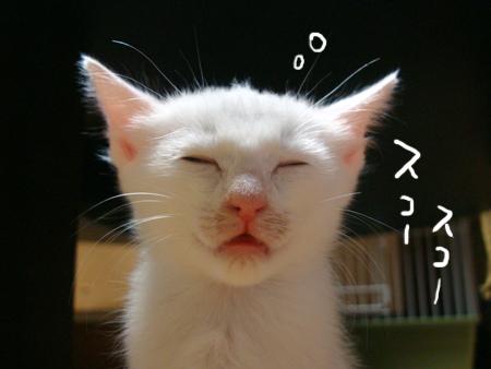 仔猫ファイブ2012.9.25②