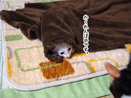 仔猫ファイブ2012.9.26①