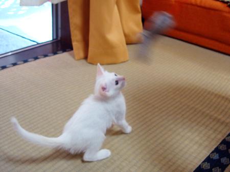 仔猫ファイブ2012.9.27②