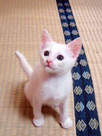 仔猫ファイブ2012.9.27④