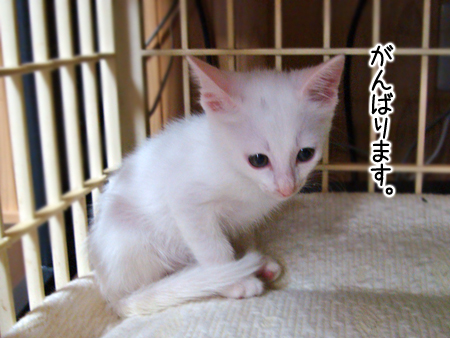 仔猫ファイブ2012.9.27⑤