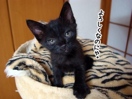 仔猫ファイブ2012.9.28⑥