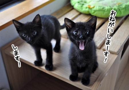仔猫ファイブ2012.10.4①