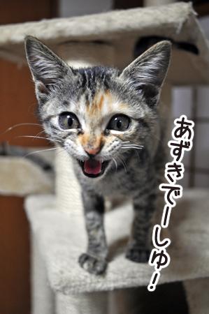 あずき2012.10.16②