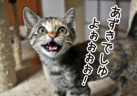 あずき2012.10.16③