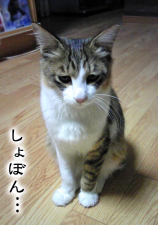 ビリー2012.10.23①