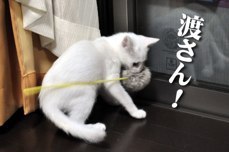 アンナ2012.10.28②