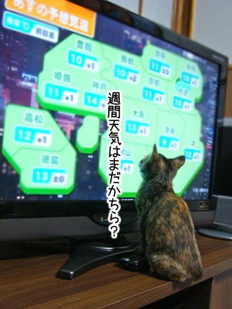 あずき2012.10.29①