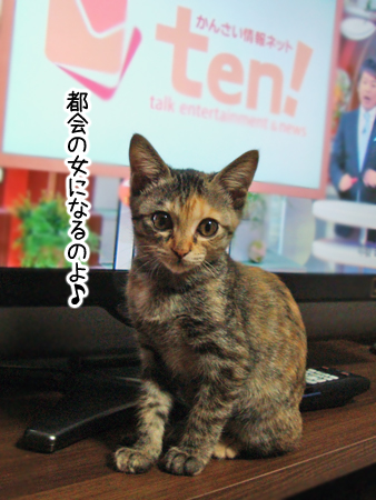 あずき2012.10.29②