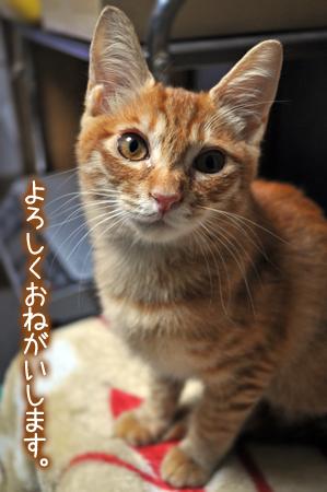 ふーみん2012.10.30②