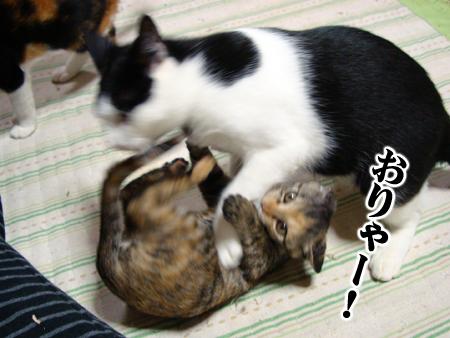 あずき2012.11.2②