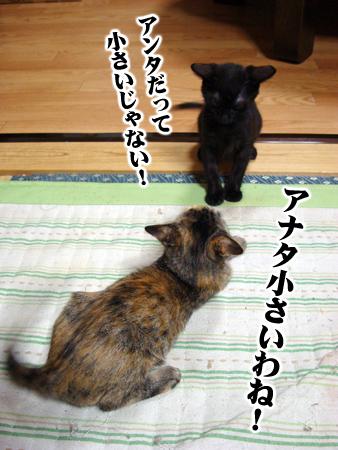 あずき2012.11.2⑤