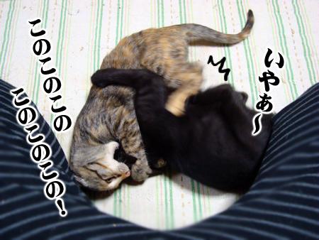 あずき2012.11.2⑥
