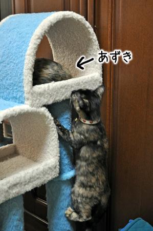 あずき2012.11.4③
