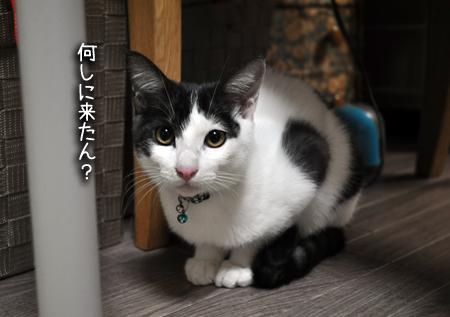 先住猫さん③