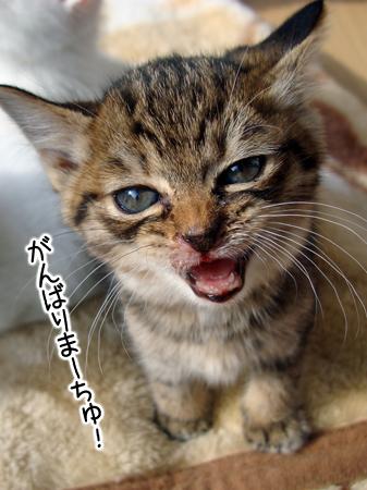 仔猫4②2012.11.18