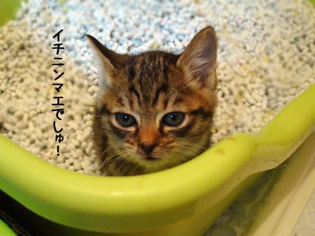 ちびうみトイレ2012.11.20