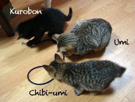 仔猫フォー2012.11.21③