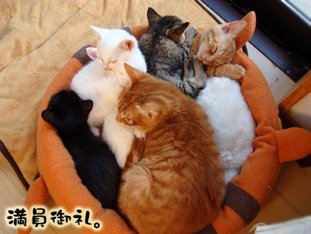 満員御礼2012.11.25