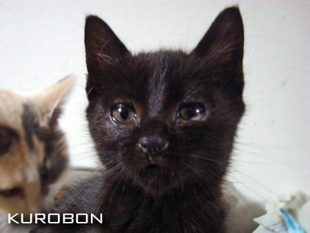 クロボン2012.12.1