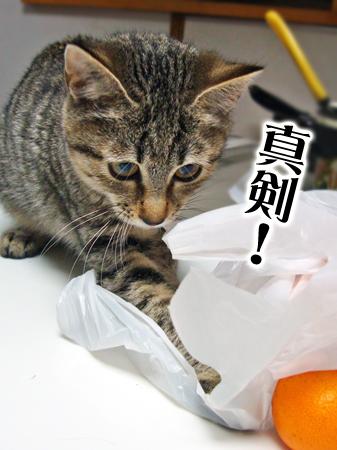 海2012.12.2②
