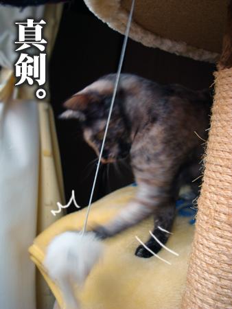 スンスンお届け2012.12.9