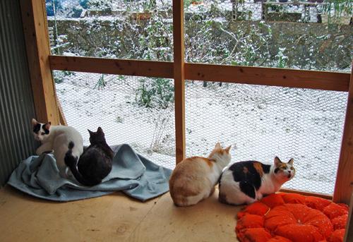 雪の裏庭2012.12.10