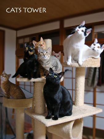 猫sタワー