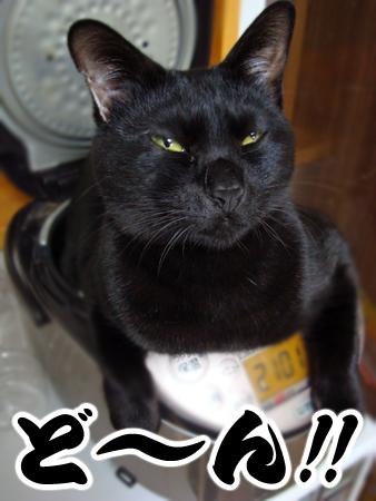 おはぎ2012.12.11②