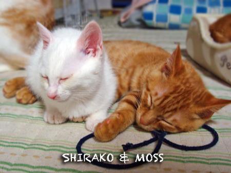 白子&モス2012.12.13