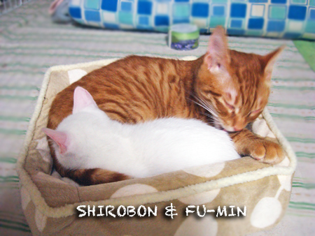 シロボン&ふーみん2012.12.13
