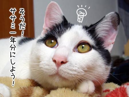 ジュニア2012.12.17②