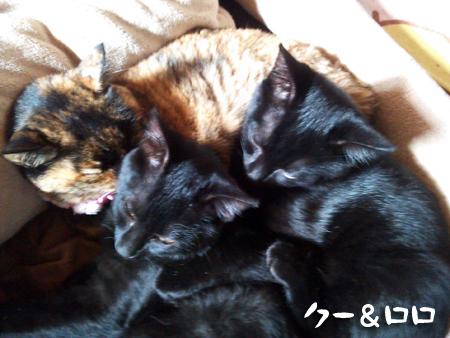 クーロロ2012.12.16②