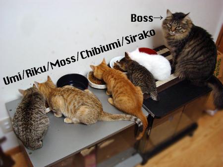 仔猫ズ2012.12.20